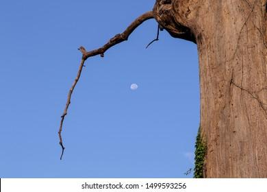 Moonset near at Siraha bazar of Siraha District - NEPAL