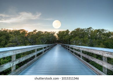 Moonset over the Boardwalk leading to Clam Pass at sunrise in Naples, Florida