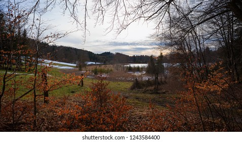 moor landscape and forest in winter, view through branches