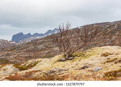 The moor landscape of Senja Island beyond the Polar Circle in Norway