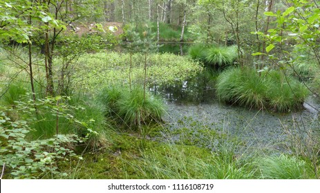 Moor ponds in the nature reserve Otternhagen Moor, distance about 20 km from the center of Hanover. Lower Saxony, Germany