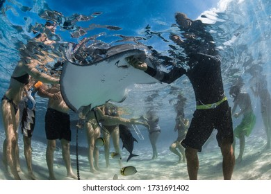 Moorea, French Polynesia - JULY, 2018: Feeding the rays and sharks in the lagoon