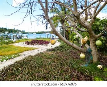 Mooring balls tree in a marina, in Man-o-War Cay, Bahamas.