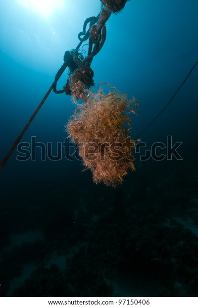 Mooring rope and fish in the Red Sea