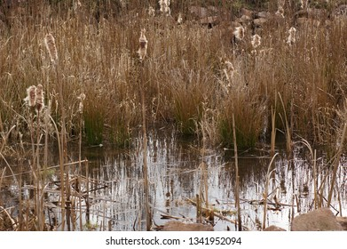 Moorland On the Riverbank
