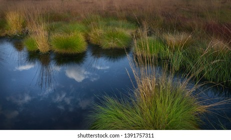 Moorland with reflection in autumn