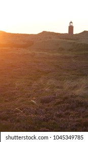 Moorland at sunset with the Keitum lighthouse in the backgound on the beautiful island Sylt, Germany