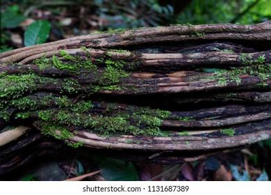 moos on old log