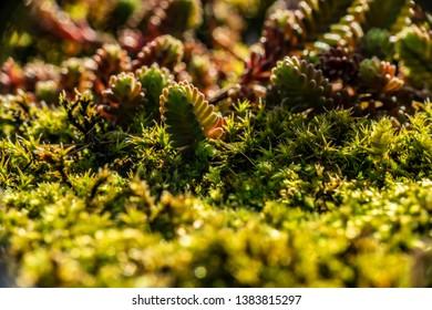 moos in spring, beautiful green