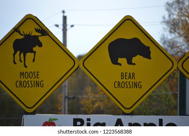 moose and bear crossing sign