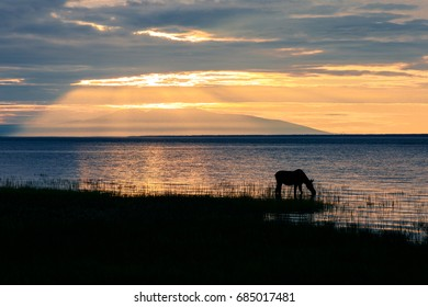 Moose in front of Mt. Susitna