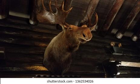 Moose head on wall at El Tovar, Grand Canyon