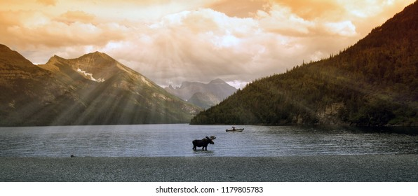 moose in a mountain lake (waterton lake, alberta, canada)