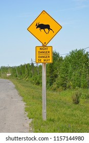 Moose and  night danger signs posted on the road