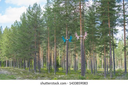Moose (or elk) antlers attached to the tall pine trees in Norway. Antlers are painted into different colors and they lead the way to the Storelgen (The Big Elk) on road E3 in  Norway.