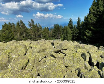 Moraines (moreni) near Aleko hut in Vitosha mountain, Bulgaria; kamenna reka (stone run) - Shutterstock ID 2030099021