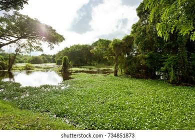 Morass of Chilaw, Sri Lanka, Asia