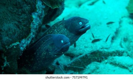 Moray eel. Coral reef. Diving. Underwater life. Thailand underwater. High resolution