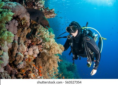 moray eel with scuba diver