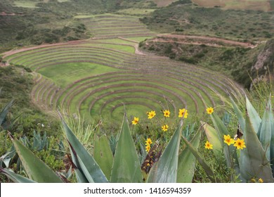 Moray near the Cuzco in Peru.  Moray is an archaeological terraced paddy field site from Inca.