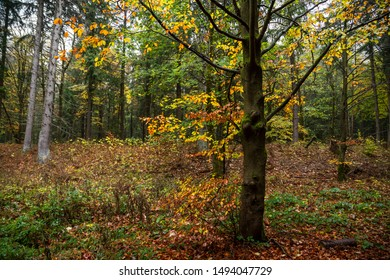 More natural mixed forest with Foliage