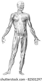 A more than 160 years published a drawing of the lexicon can be undertaken. (source: Bilder Atlas Brockhaus, 1849.) The human body muscle structure depicts the front view.