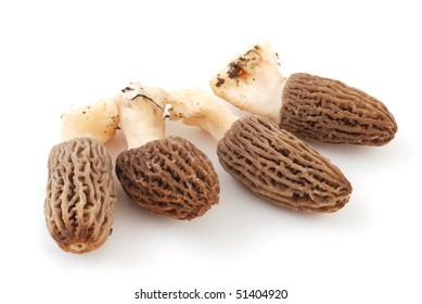 Morel, Morchella or Morel Mushroom isolated on white background. Morel - morchella on white. Healthy morel, morchella.