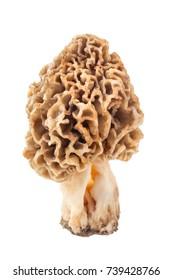 Morel mushroom isolated  on white background