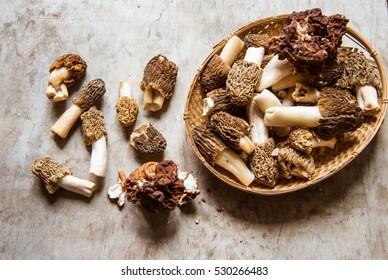Morel mushrooms/toned photo