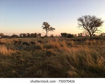 Moremi Wildlife Reserve, Okavango Delta, Botswana