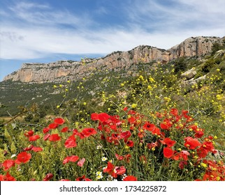Morera de Montsant, Tarragona / Spain - May 17 2020: Colorful flowers with the Montsant mountain in the background in Tarragona, Spain