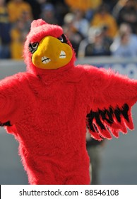 MORGANTOWN, WV - NOVEMBER 5: The Louisville Cardinals mascot celebrates a score during the football game between Louisville and WVU November 5, 2011 in Morgantown, WV.