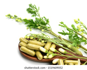Moringa capsules on wooden spoons and flowers, leaves, isolated on a white background.
