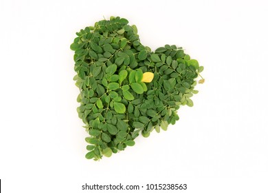 Moringa, green leaves have property medicine.(Heart-shaped)