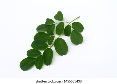 Moringa green leaves on white background.  Moringa Oleifera, tropical herbs.