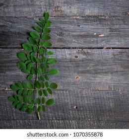 Moringa herb leaves on dark wood background