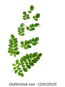 Moringa leaves have medicinal properties. top view