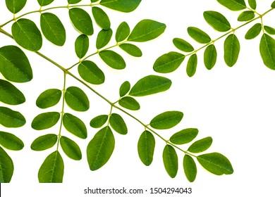 Moringa leaves isolate on white background