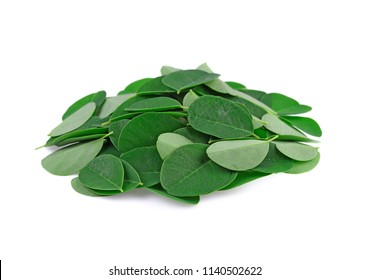 Moringa leaves on white background.
