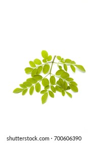 Moringa leaves on white background. Anatural source of these nutrients, it is highly bioavailable, so our bodies can absorb the benefits more easily than by taking synthetic supplements