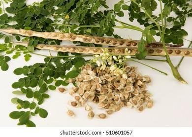 moringa oleifera medicinal properties pdf
