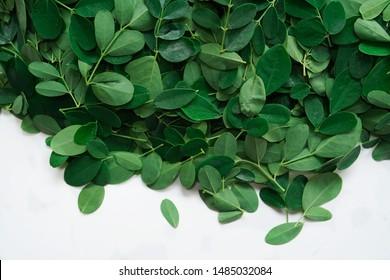 Moringa or Muringa leaves isolated on white, selective focus