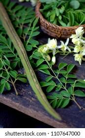 Moringa Oleifera flower