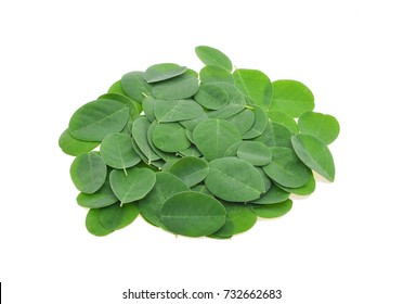 Moringa oleifera leaves isolated on white background.