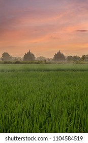 Morning Activity Around Plaosan Temple