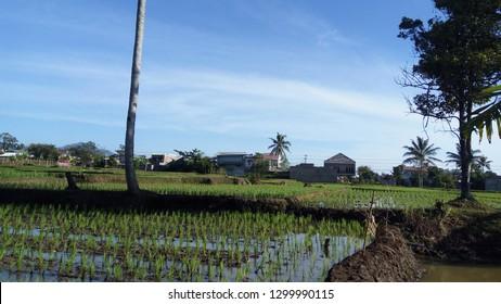 morning atmosphere in Warung Kondang village