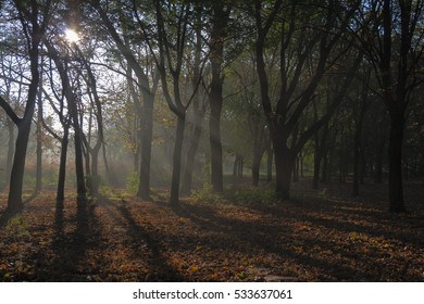 Morning in the autumn forest. Fog.