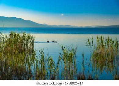 Morning in the beautiful ornithological nature park and Vrana lake (Vransko jezero) in Dalmatia, Croatia, ducks on the surface - Shutterstock ID 1758026717