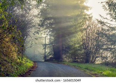 Morning burst of sun rays on a rural stretch of road