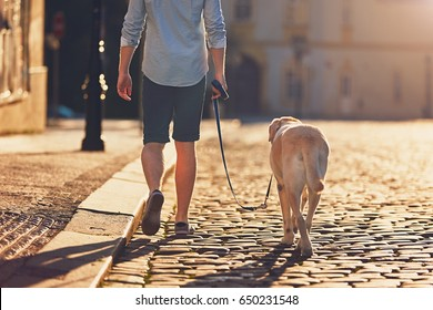 Morning in the city. Young man walking with his dog on the old street at golden sunrise. Prague, Czech Republic